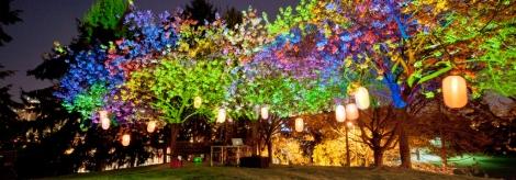 Sakura Illumination // Photo: Kevin Eng